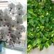 Бурен цъфтеж и буйна зеленина се очакват още на пролет, ако поливате растенията с тази проста смес