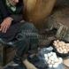 История за възрастния човек, който продаваше яйца-Ето какво се случи, когато богаташка реши да си купи