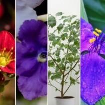 Енергията е важна: Пет стайни цветя, които привличат любовта към вашия дом