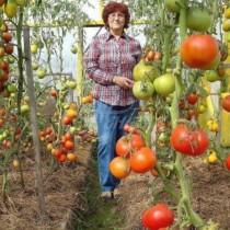 Ако сте засадили домати, обезателно им сложете от това за обилна реколта