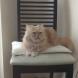 Котката, която пази дома от невидимото зло!