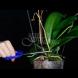 Какво да правим, ако орхидеята не иска да цъфти-Супер прост способ, който я кара бързо да цъфне