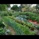 Златни правила за перфектна зеленчукова градина