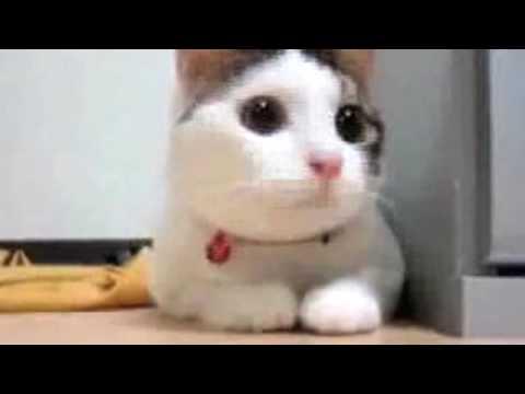 Най - забавните котки на света :)