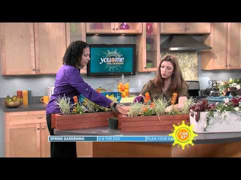 Как да засадим сандъче с цветя за прозорец или балкон