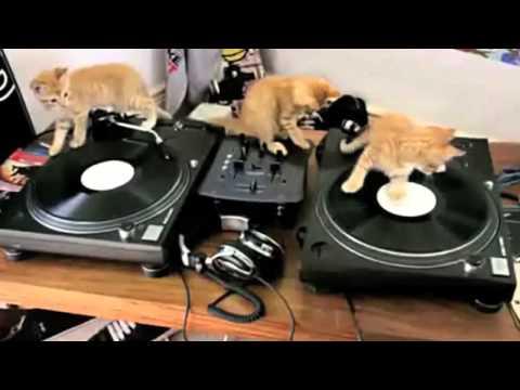Най - смешните котки на света 3 :)