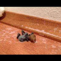 Мислеше, че е убил паяк, но това, което се случи след това го шокира