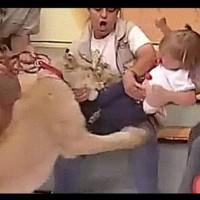 Лъвче нападне бебе в студиото на живо