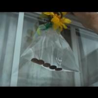 Вижте защо тази пролет задължително трябва да поставите плик с вода и монети на вратата