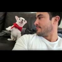 Кученцето, което приема комплименти