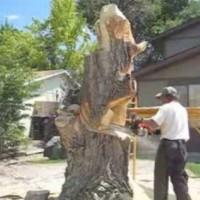 Невероятно творение от старо дърво