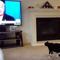 Ето какво се случва, когато тази котка се види Доналд Тръмп