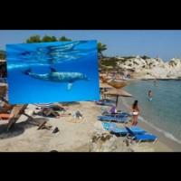 Делфин на плаж в Гърция