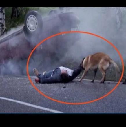 Куче спасява човек