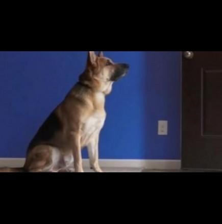Кучето им не спи вечер, а застава пред стаята им и ги наблюдава