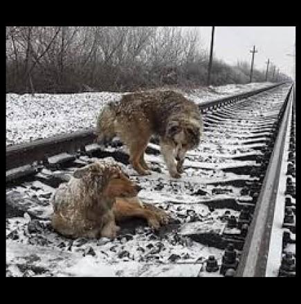 Трогателна история за 2 кучета