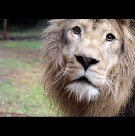 Емоциите на животни, които се освобождават от цирка