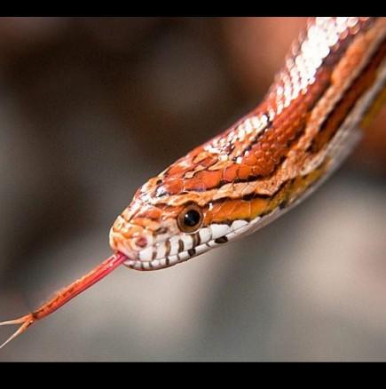 Змия ухапа дете