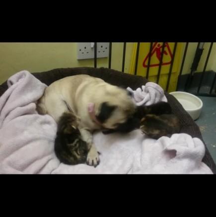 Куче се грижи като майка за три малки котета