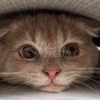 Котките и краставиците