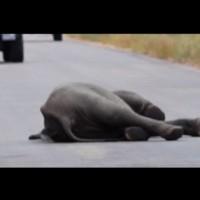 Слонче пада немощно на пътя