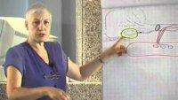 Д-р Емилова - лекция за подагра и камъни в бъбреците