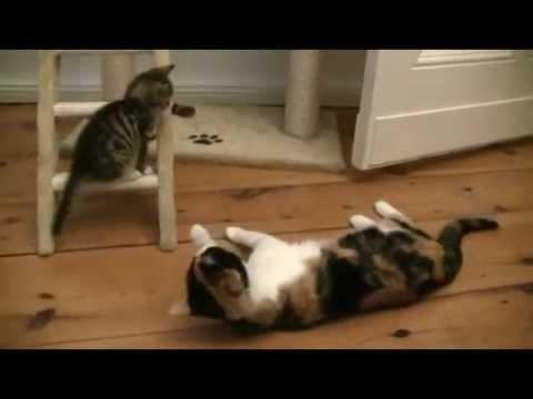 Смешни котки, бебета и животни
