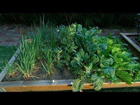 Зимна градина със зеленчуци