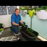 Как да си направим малка зеленчукова градина