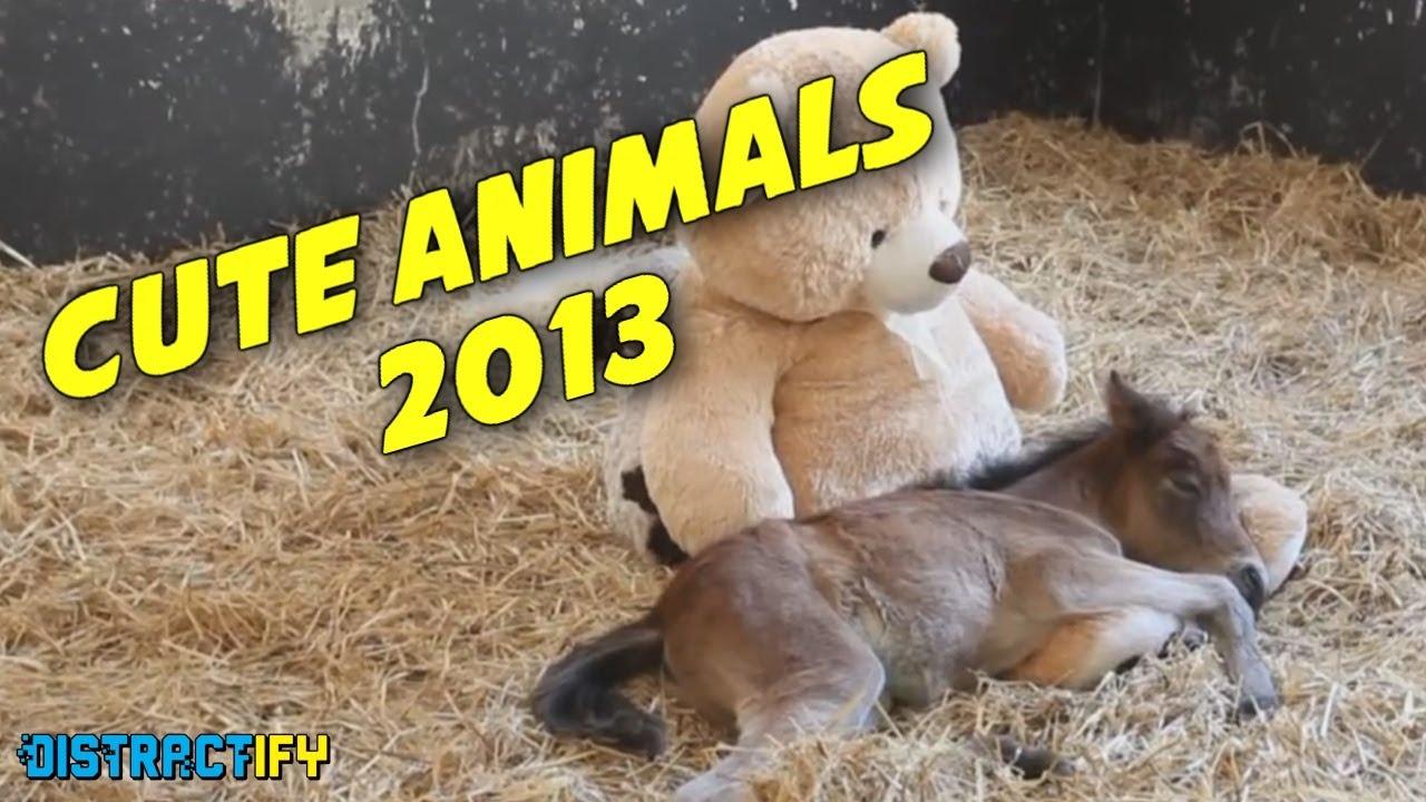 Вижте най-сладките моменти с животни от 2013
