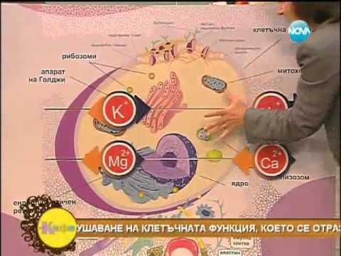 Д-Р Мария Папазова - клетките в човешкото тяло