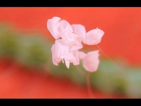 Цвете, което цъфти веднъж на 3000 години