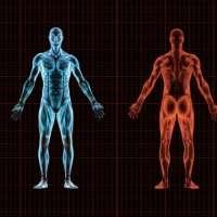 Части от тялото, които нямат цел