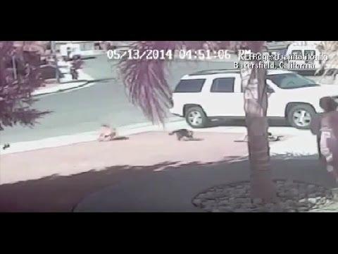 Котка спаси дете от зло куче