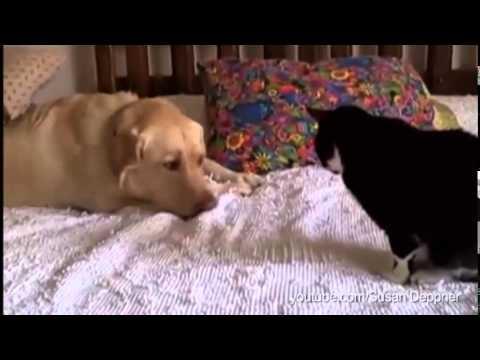 Куче и коте се каран
