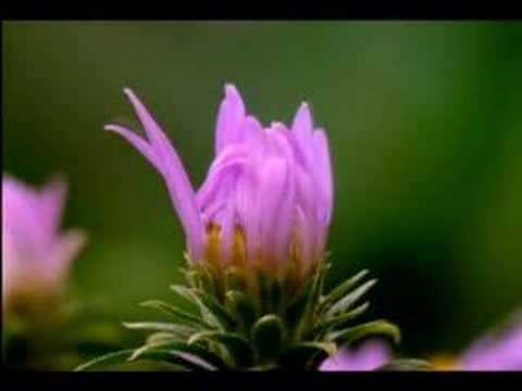 Цветя в растеж уникални кадри