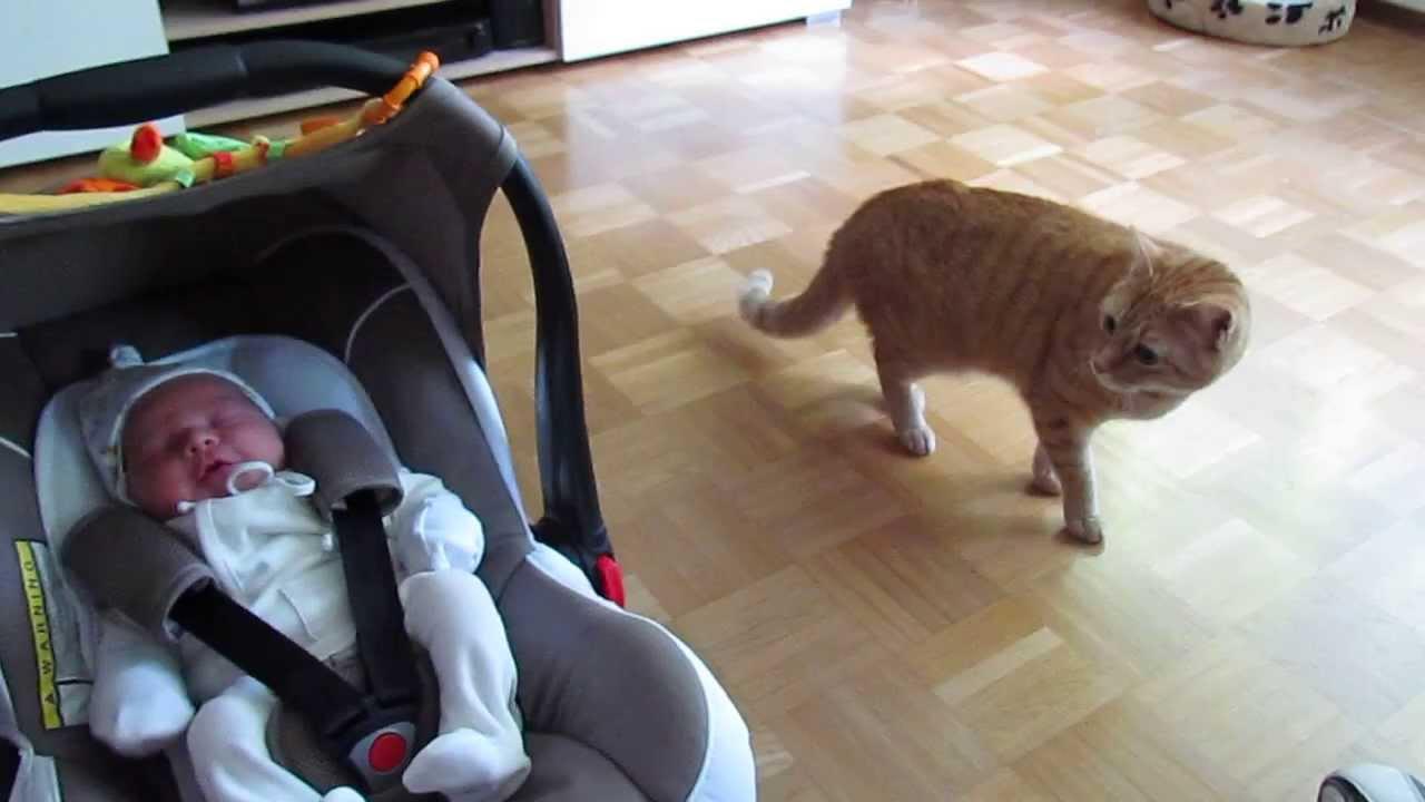 Коте вижда бебе за първи път