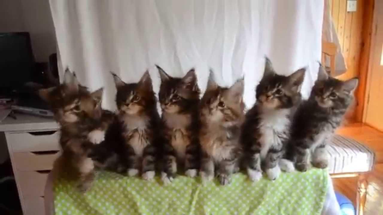Сладки палави котета - Тест рефлекси в котенца