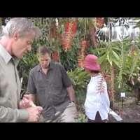 Билката, която убива рак Artemisia Annua - сладък пелин