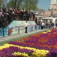 Най-големият килим от лалета в света беше представен в Истанбул