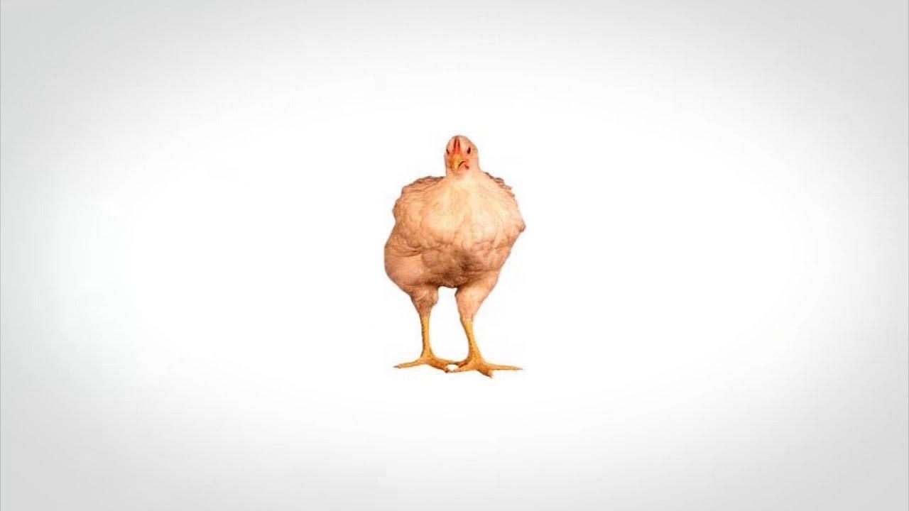 Истината за пилетата, които ядем
