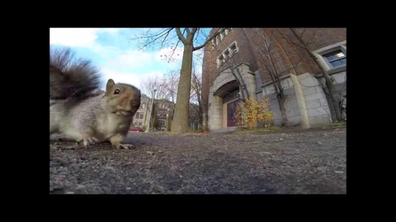 Видео снимано от катеричка