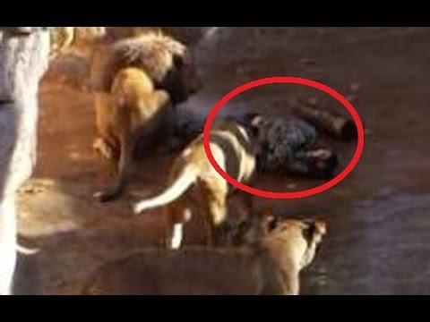 Инцидент в зоологическа градина