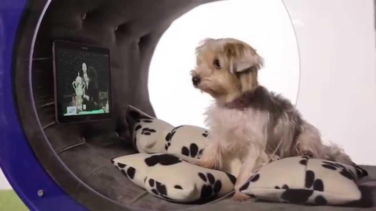 Луксозен кучешки дом – ако можехте, и вие щяхте да се преместите в него