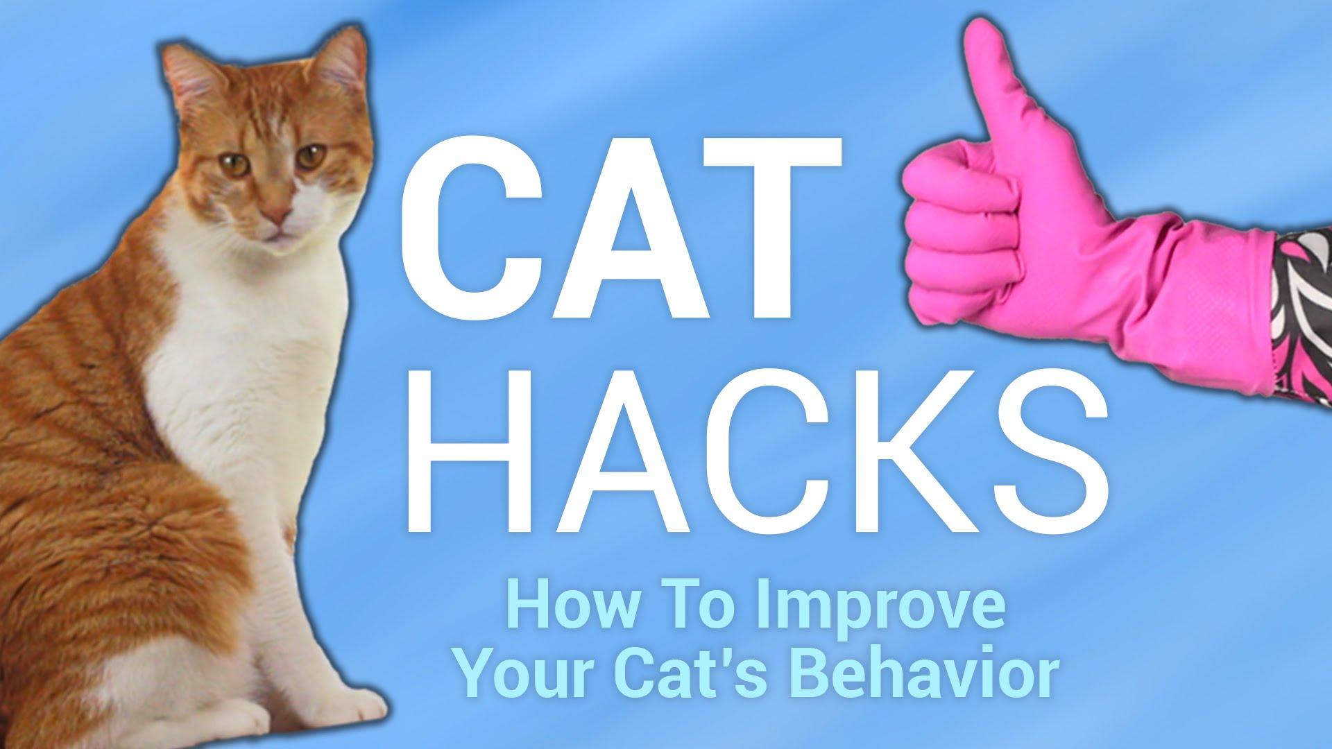 Полезни трикове когато имаме котка