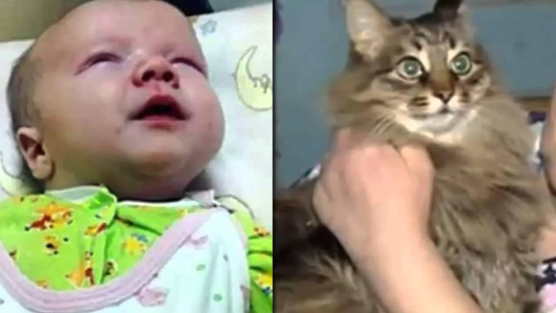 Котка спаси бебе