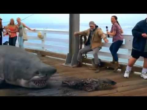 Акула изплю човек
