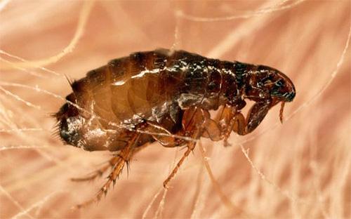 Ларви растат по тялото на човек