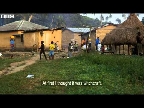 Дървото което разпространи ебола по света