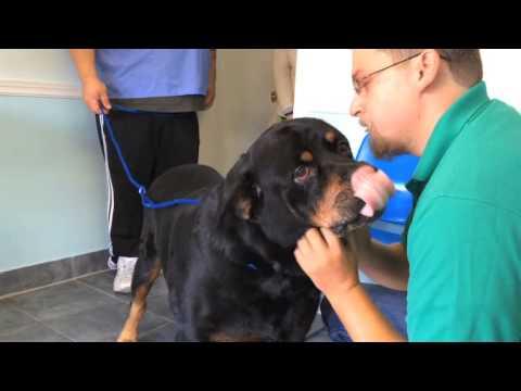 Куче намери стопанина си след 8 години